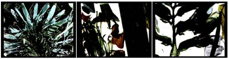 02-brakhage_dvd-cluster